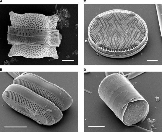 硅藻土图片